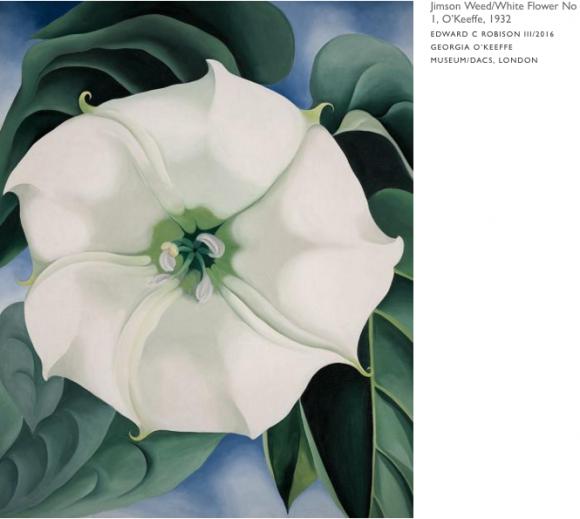 Jimson Weed/White Flower No 1, O'Keeffe, 1932 EDWARD C ROBISON III/2016 GEORGIA O'KEEFFE MUSEUM/DACS, LONDON