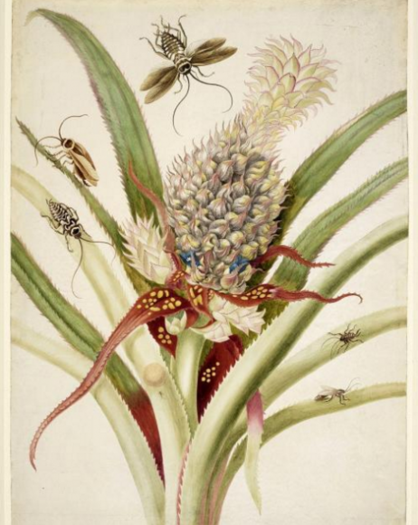 Pineapple with cockroaches, 1702-03 ROYAL COLLECTION TRUST/© HER MAJESTY QUEEN ELIZABETH II 2016